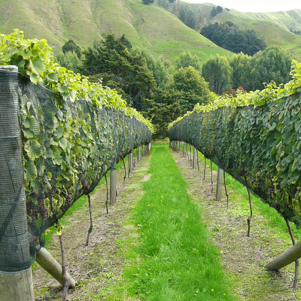 Vine Side Net